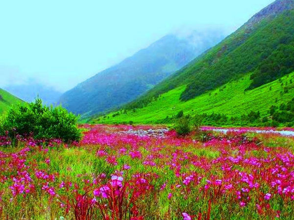 You are currently viewing Valley of Flowers