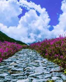 Valley Of Flowers Hemkund Sahib